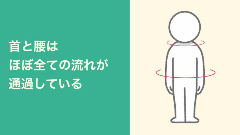 体の流れは首と腰を通過する
